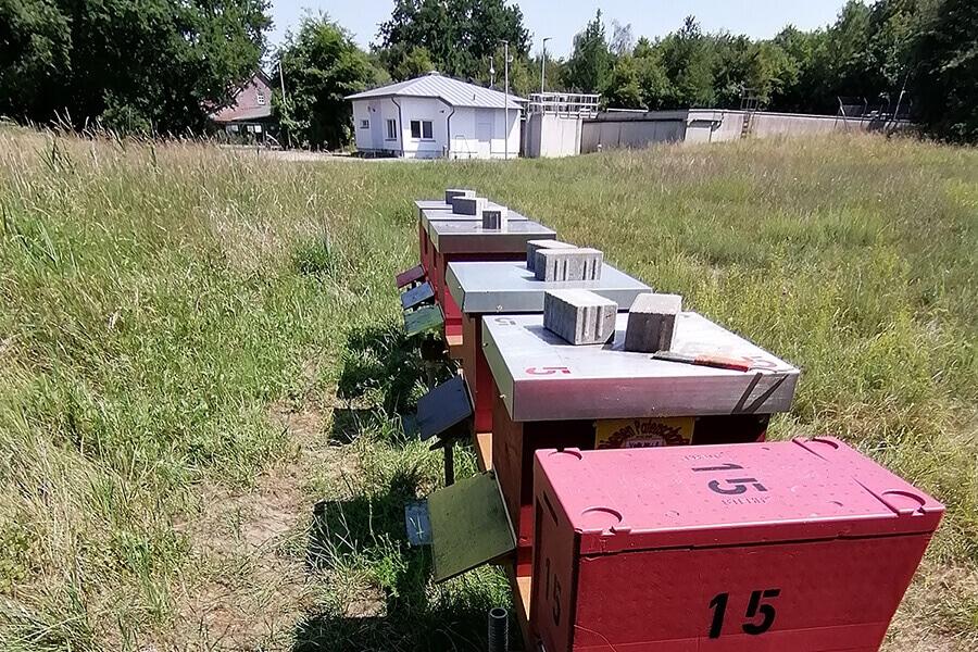Bienenstöcke auf dem Geländer der Pumpsation Selbeck