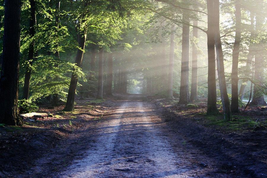 Sonnendurchflutete Straße im Wald